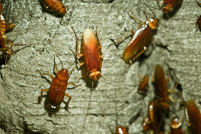 cockroach pest control in Motueka